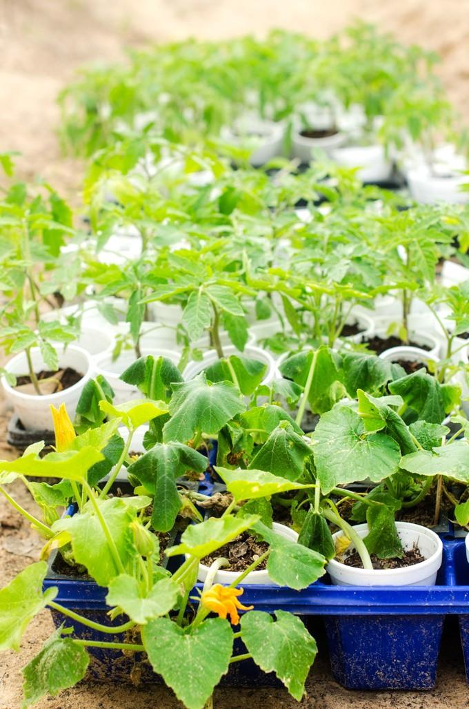 garden-starts