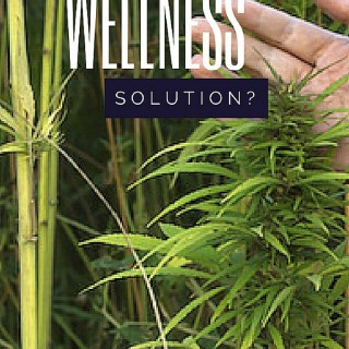 Your Wellness Solution?
