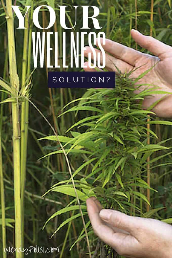 Your Wellness Solution