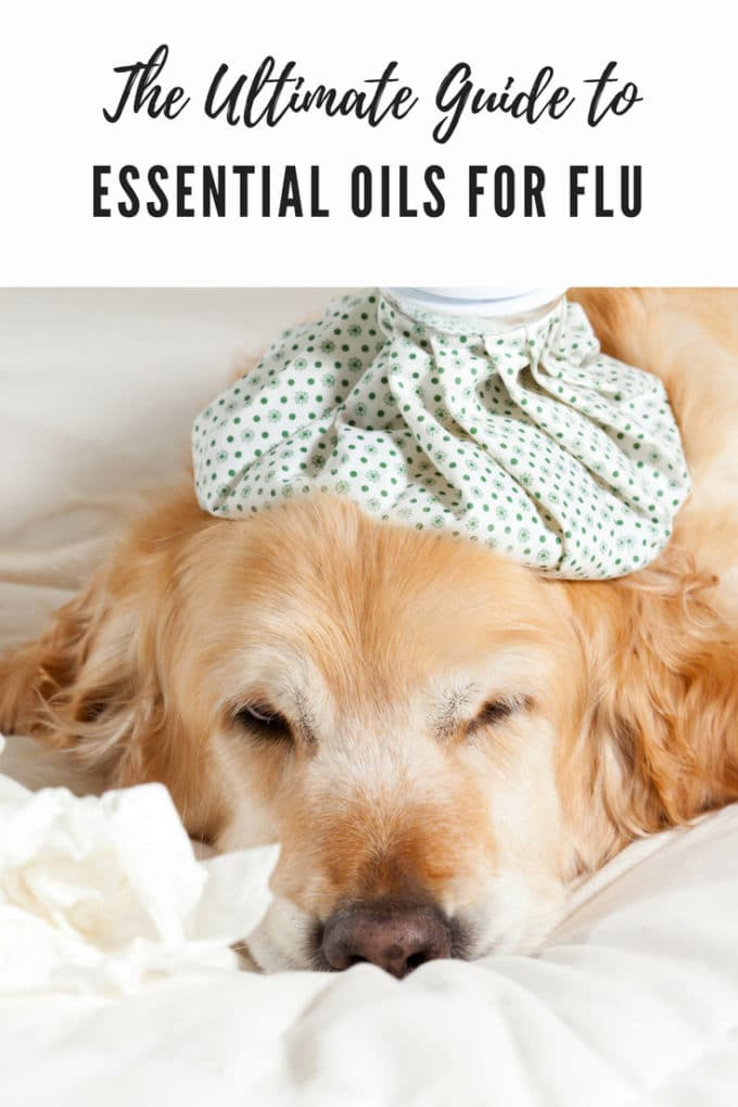 When you are sick, essential oils for flu are a fabulous way to support your immune system. Here is The Ultimate Guide to Essential Oils for Flu.