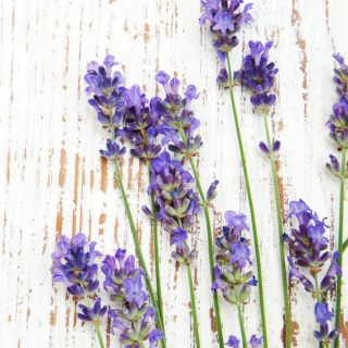 25 Insanely Awesome Ways to Use Lavender Essential Oil