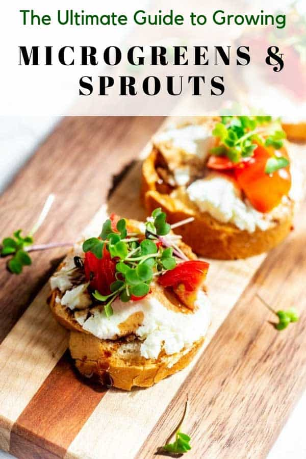 "Photo of a small toast with got cheese, tomato, and microgreens and the text above ""The Ultimate Guide to Growing Microgreens & Sprouts"""